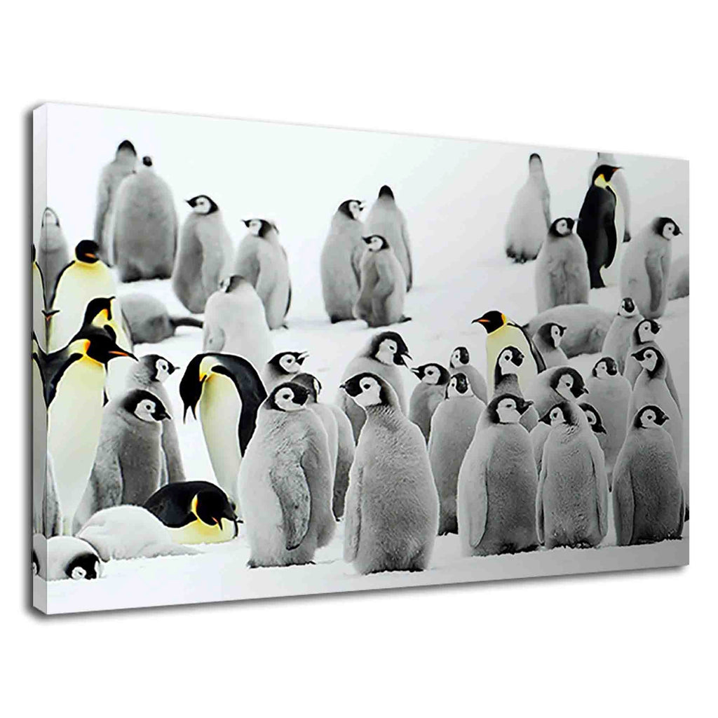 Adorable Emperor Penguin Chicks For Kids Bedroom