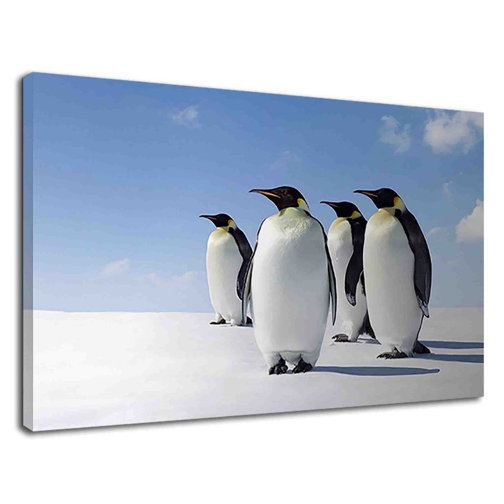 Emperor Penguins In Antarctica For Drawing Room