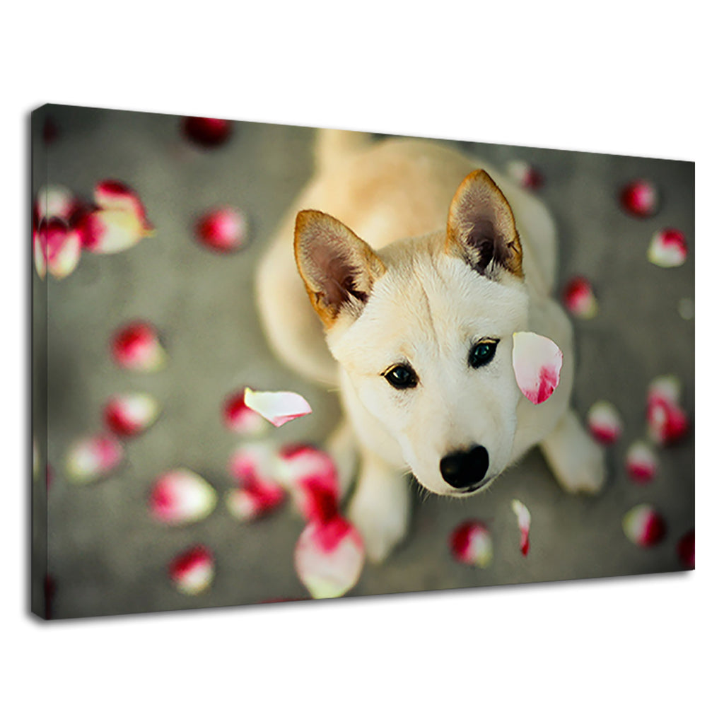 Falling Petals Of Roses On A Cute Dog For Bathroom