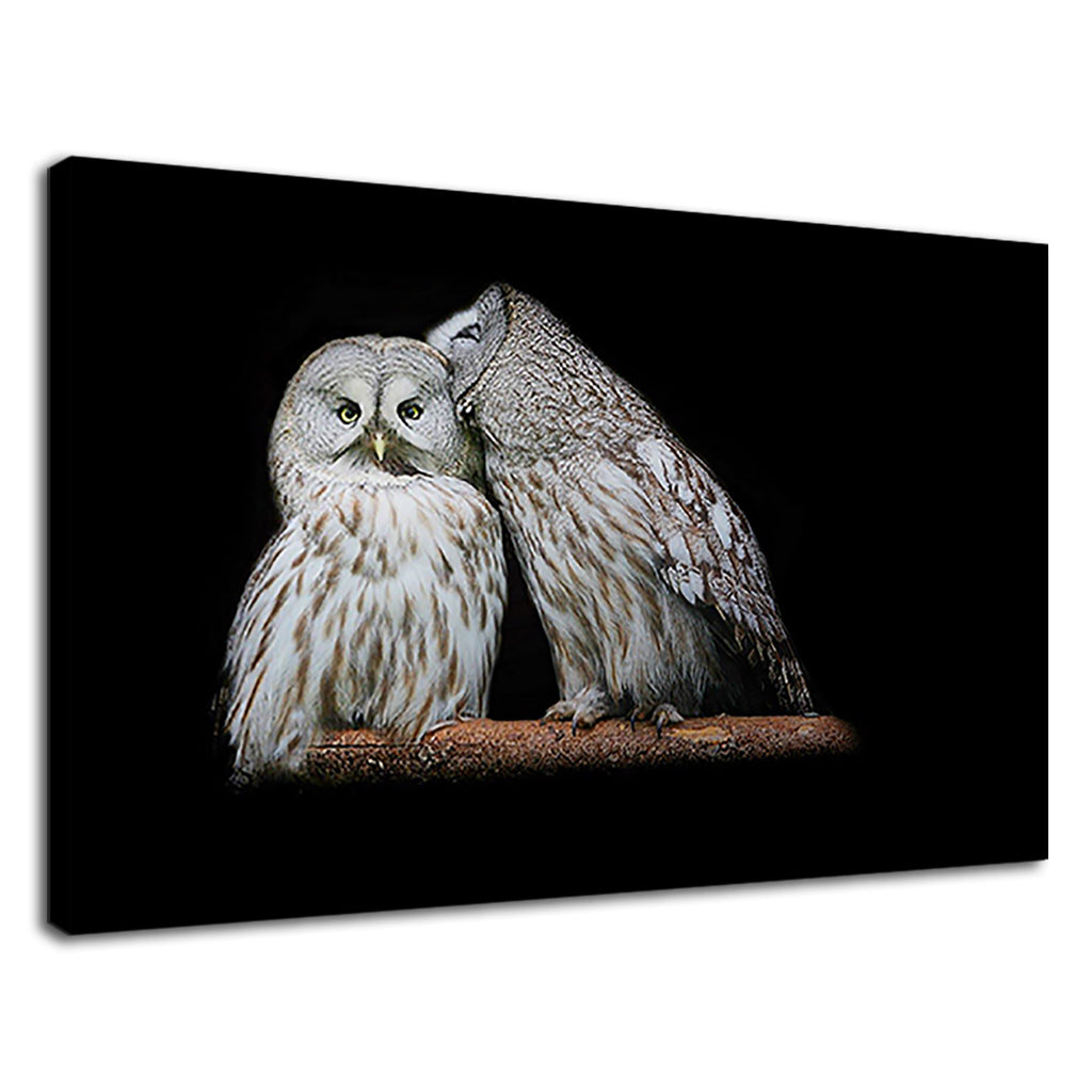 Sweet Owls Couple On Tree Branch Under In Night