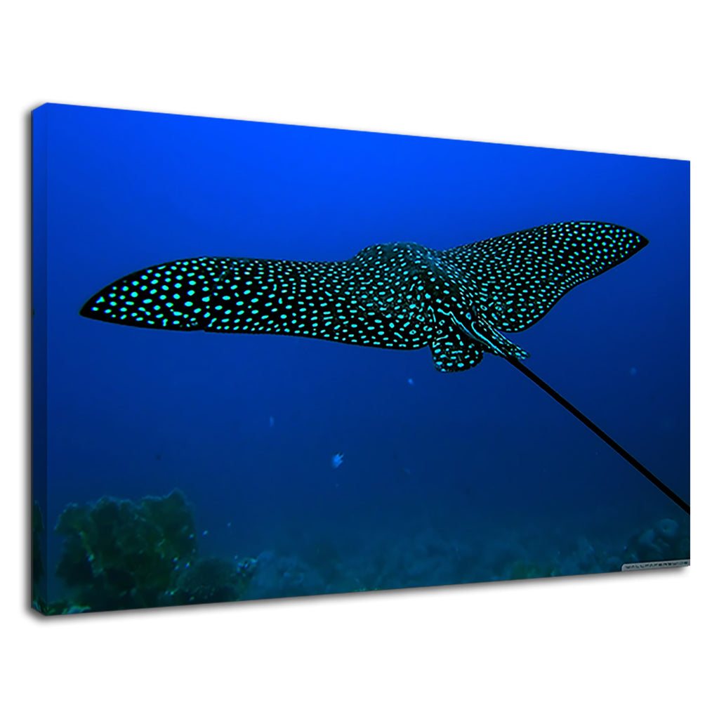 White Spotted Eagle Ray For Drawing Room