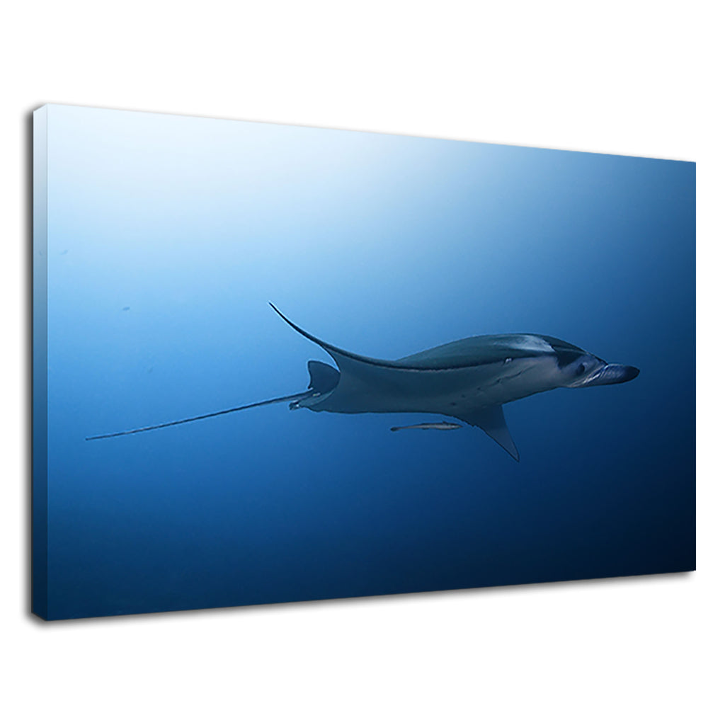 Stingray Into Deep Blue Ocean For Drawing Room