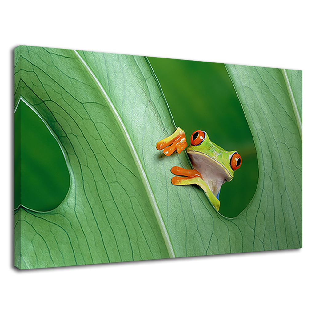 Cute Tree Frog On A Leaf For Bathroomÿ