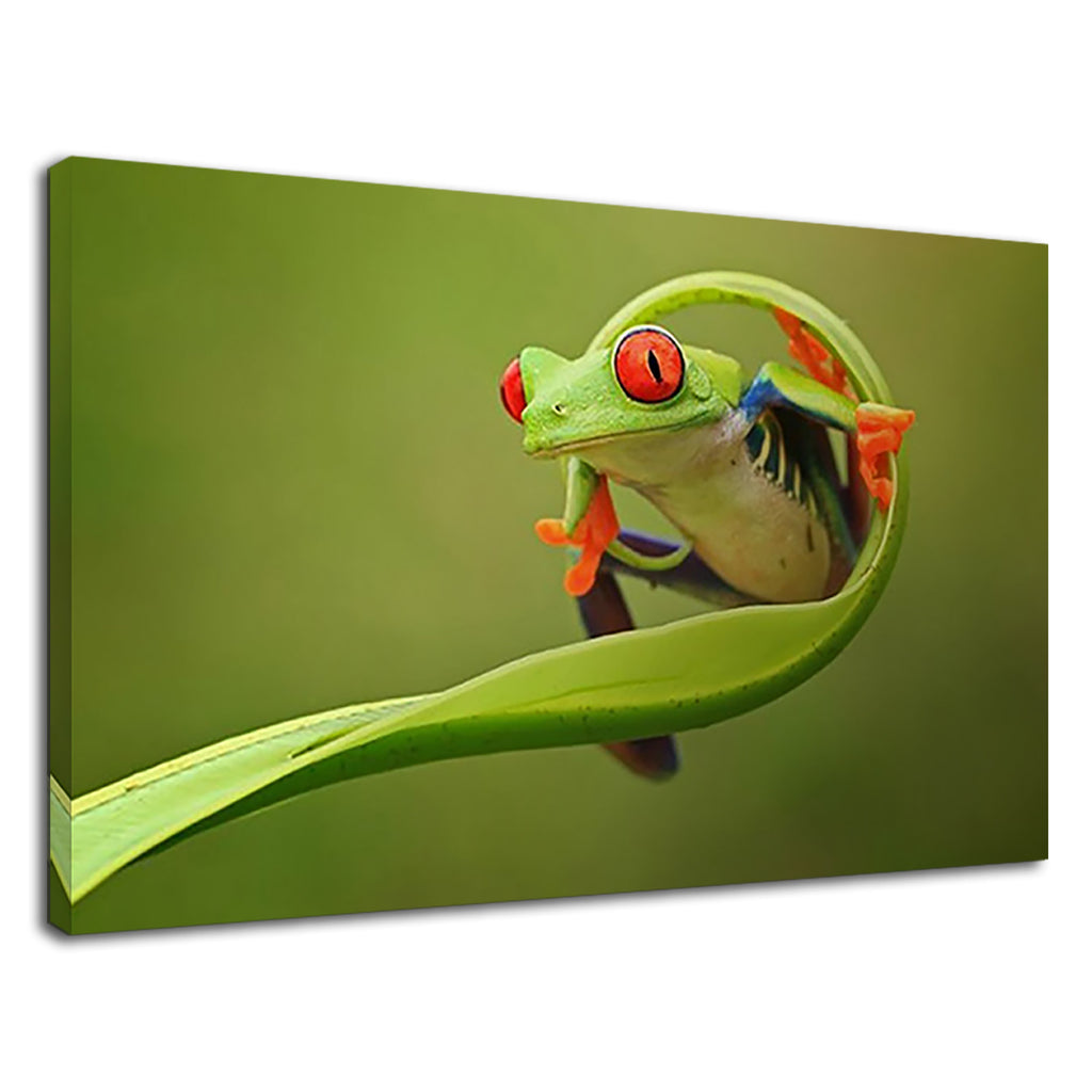 Red Eyed Green Tree Frog For Bathroom