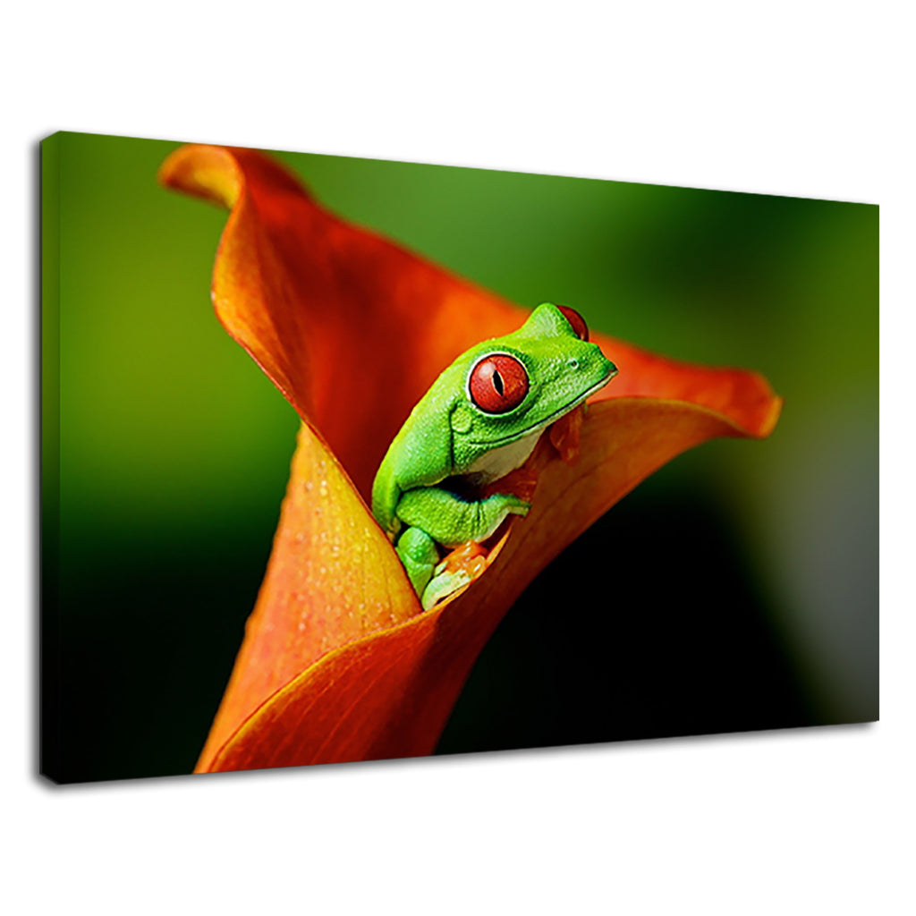 Neon Red Eye Frog On A Orange Flower For Bathroom