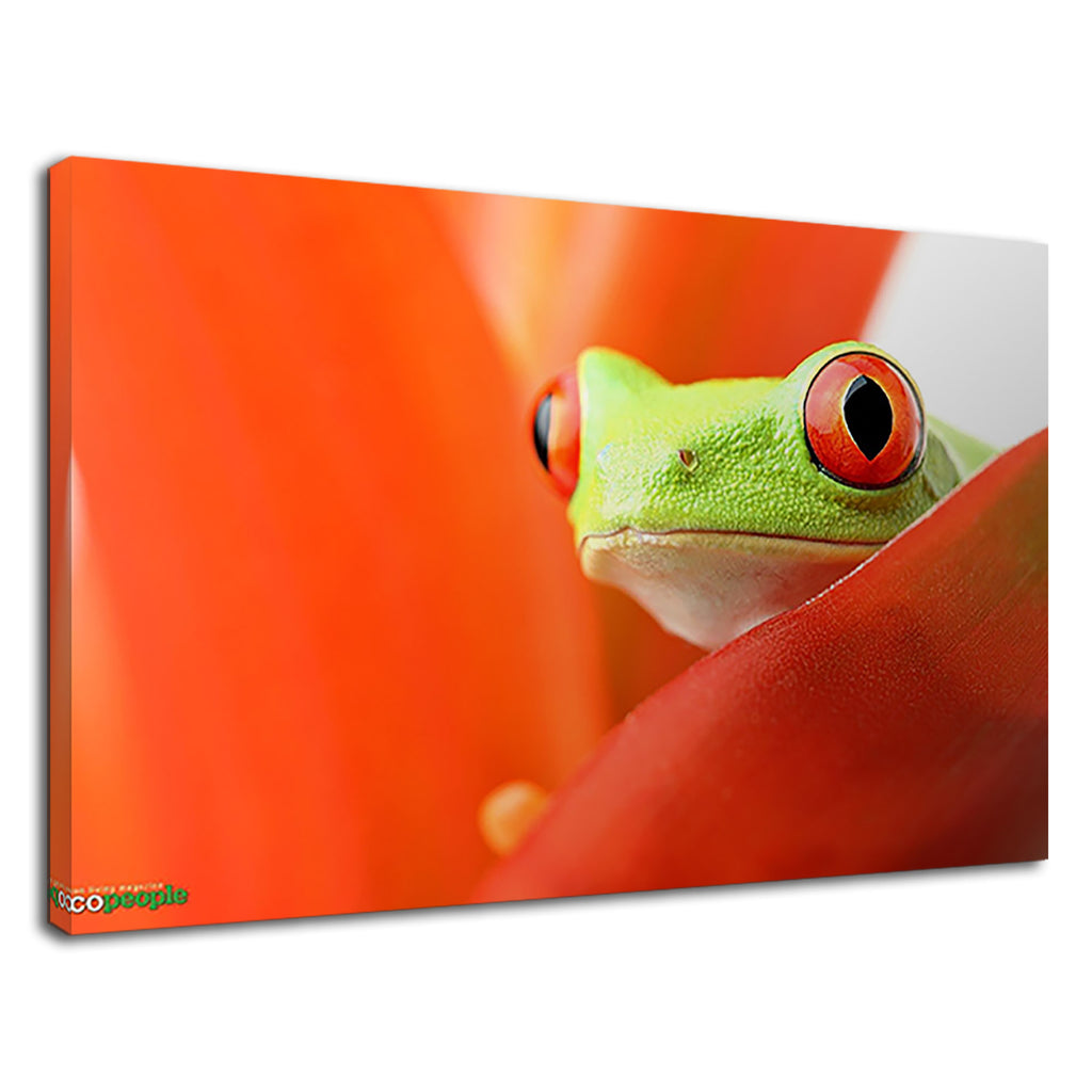 Green Tree Frog On A Leaf For Bathroom