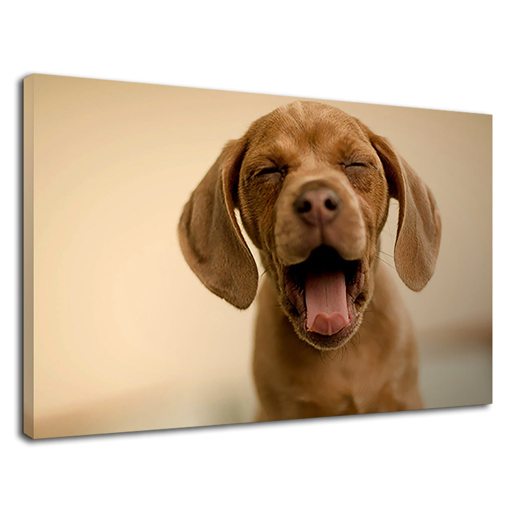 Cute Brown Puppy Yawning For Drawing Room