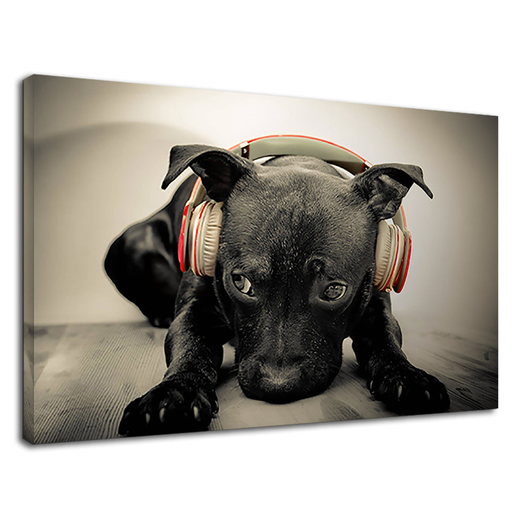 Cute Dark Black Labrador Puppy Listening Music