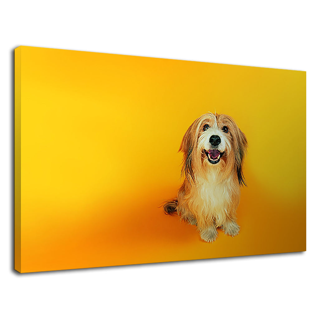 Brown Lhasa Apso On Yellow For Kids Bedroom