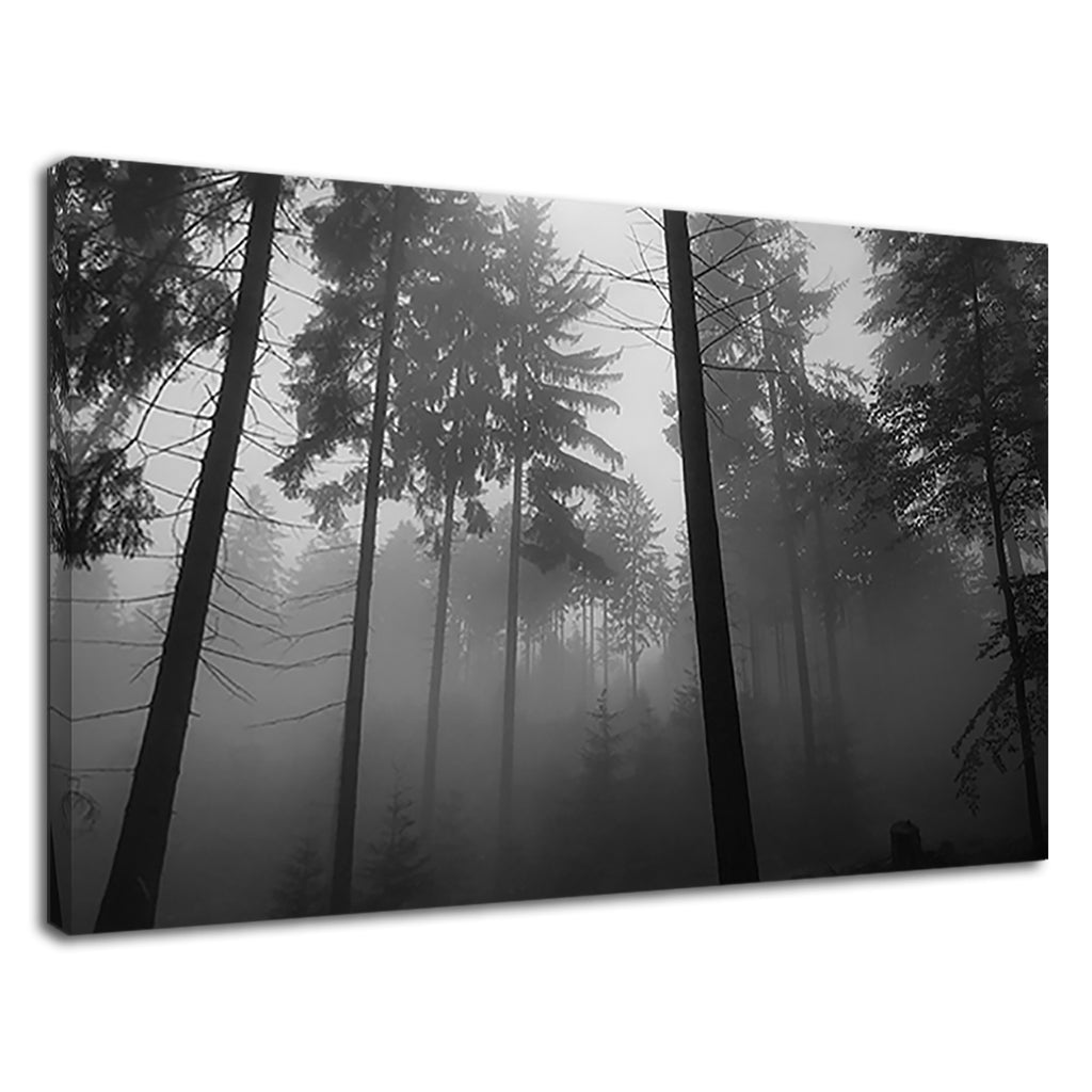 Foggy Forest Black & White For Drawing Room