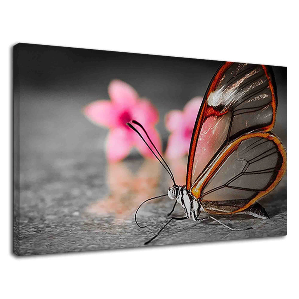 Amazing Glasswing Butterfly For Drawing Room