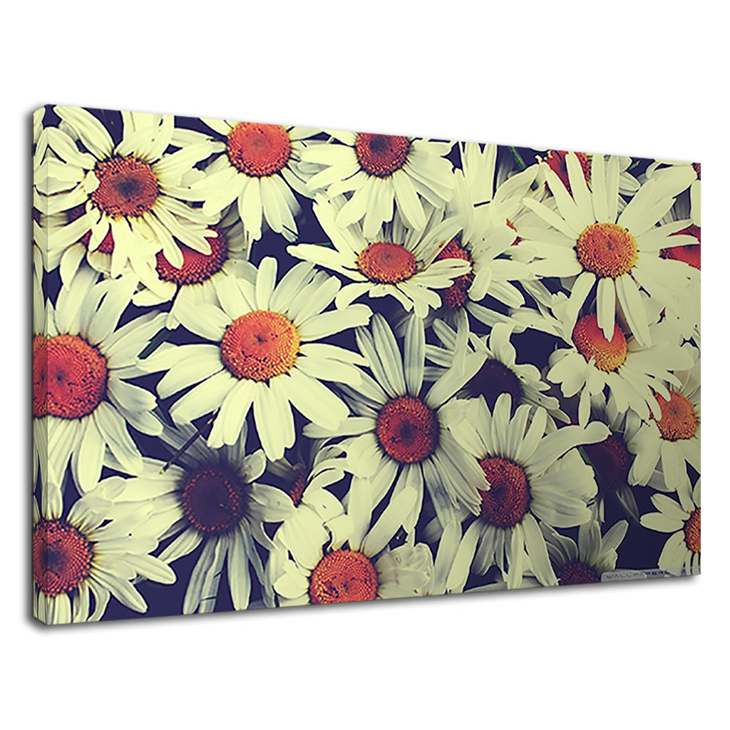 Macro Vintage Daisy Field Cute Quaint Home Kitchen