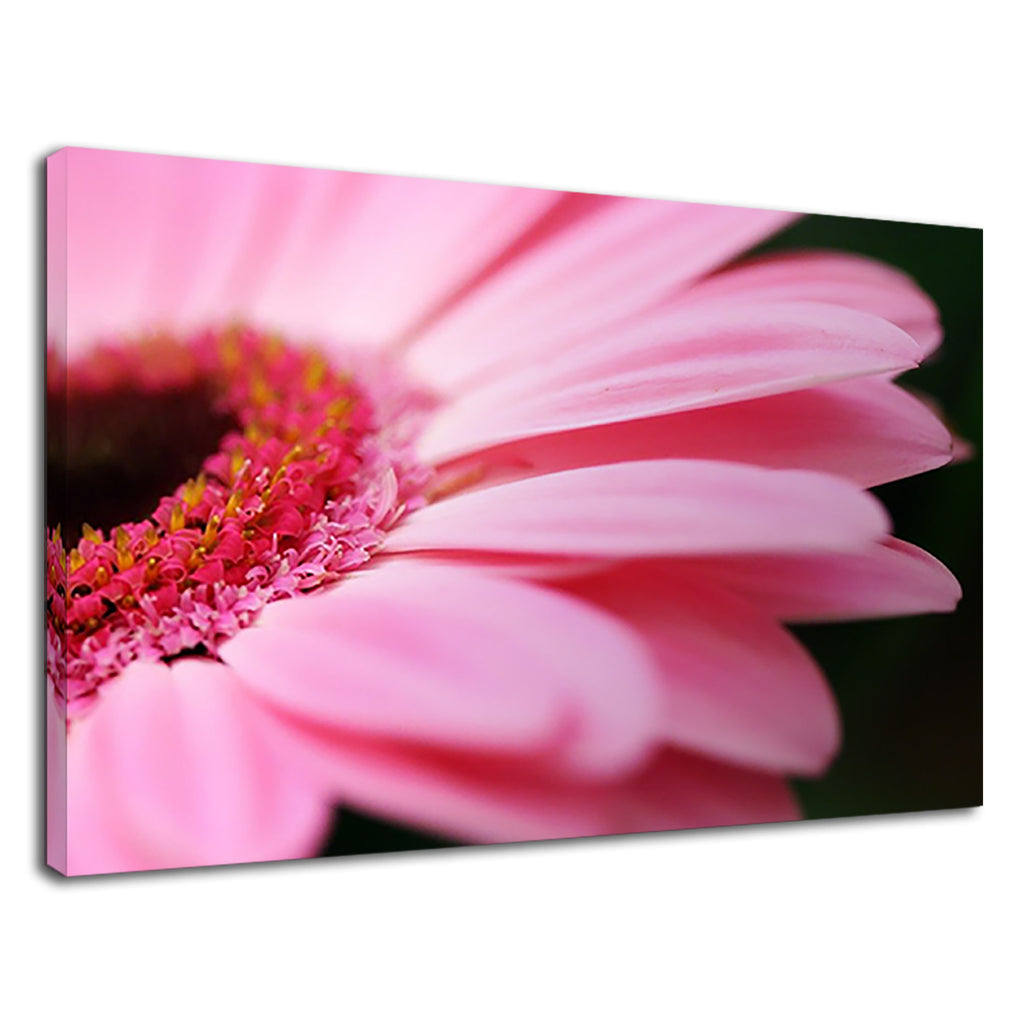 Beautiful Pink Gerbera Daisy For Girls Bedroom