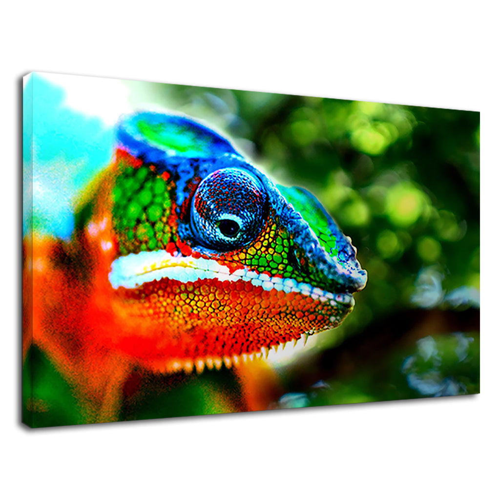A 7 Colour Chameleon Wildlife Photography