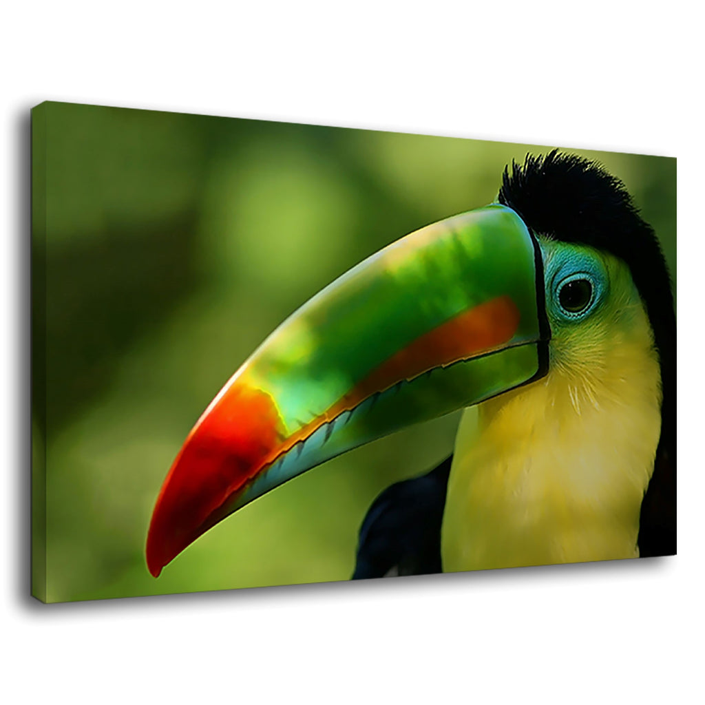 Toucan Parrot Exotic Rainforest Bird Wildlife