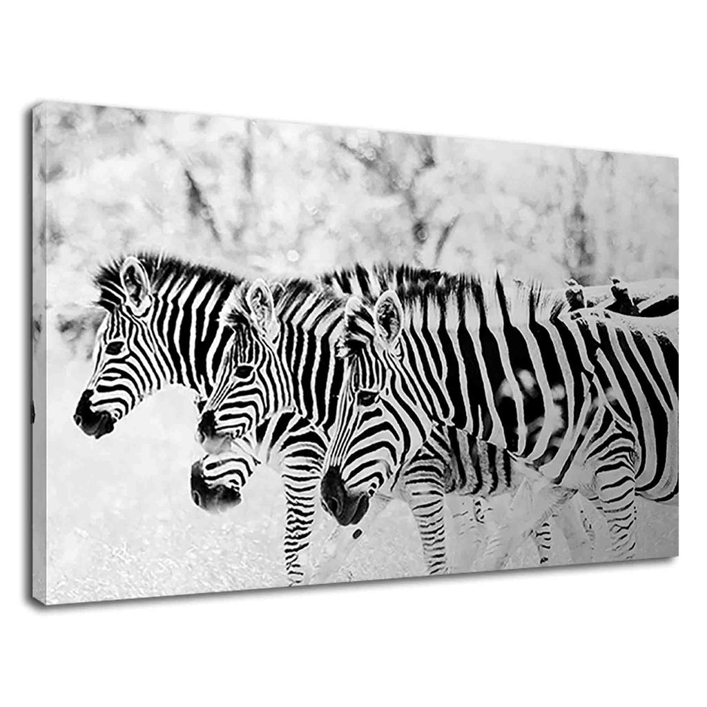 Zebra Family Together In Forest Black And White