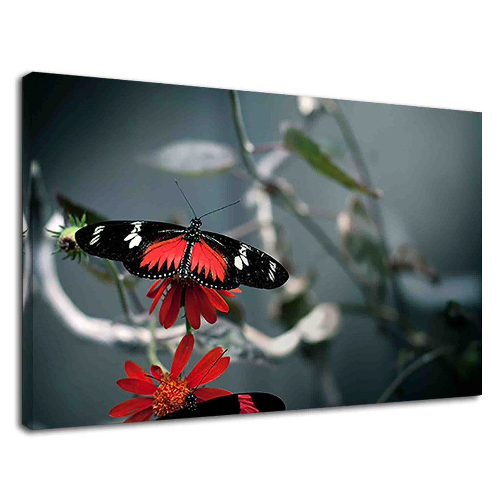 Beautiful Black And Red Butterfly On Red Flowers