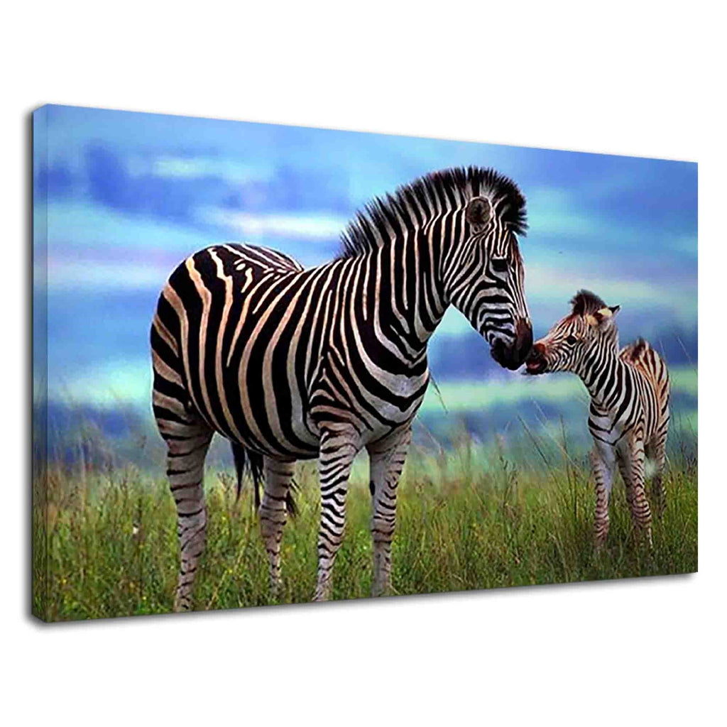 Zebra Cub With Mother Zebra In Savanna Grassland