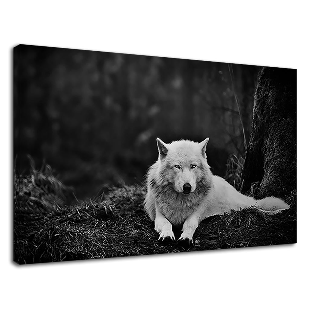 White Wolf Lying In Wait Forest Animal Large Stunning