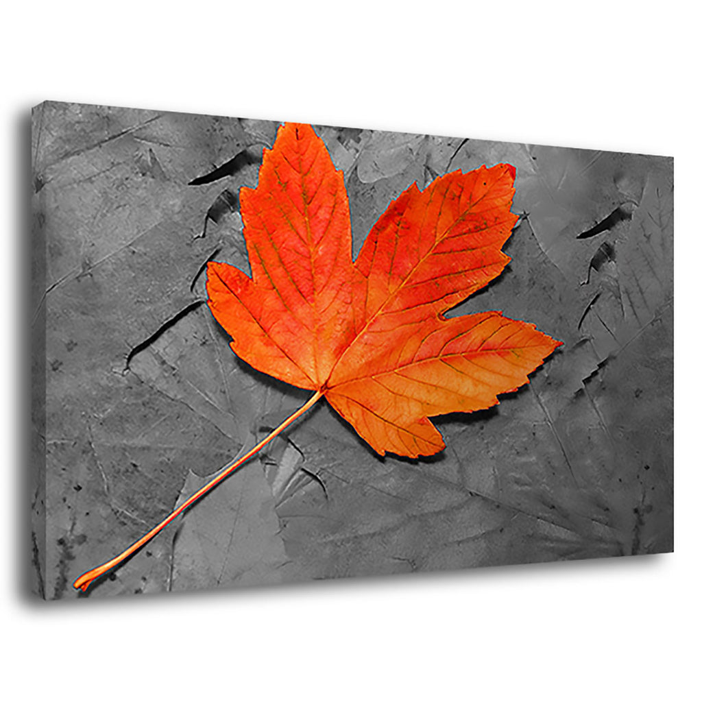 Maple Leaf Maple Leaf Canada Autumn Leaves Nature