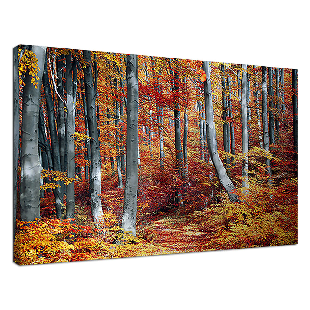 Autumn Leaves Orange Nature Landscape Trees Orange