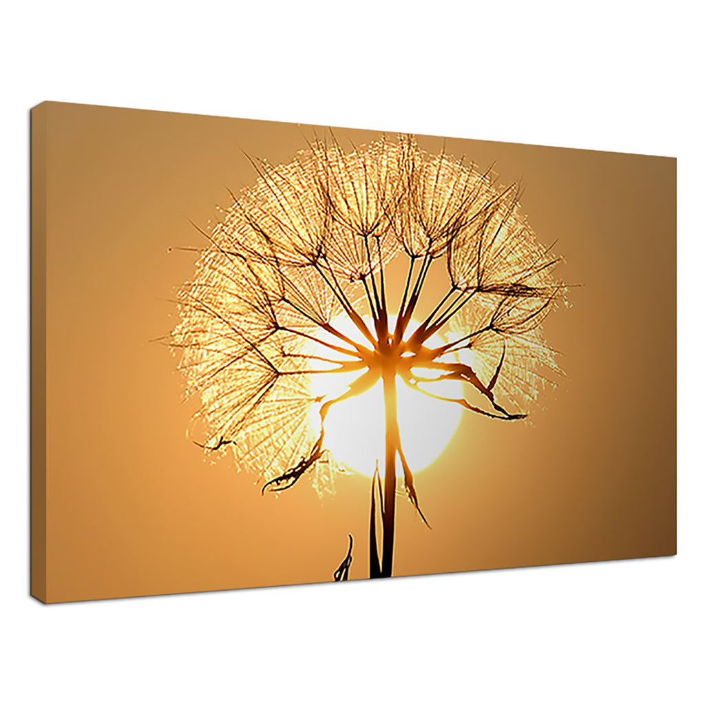 Dancing Dandelion Yellow Floral Sunset Daisy