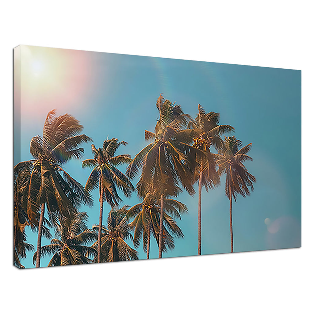 Palm Tree Summer Blue Sunset Sky Palms Fronds