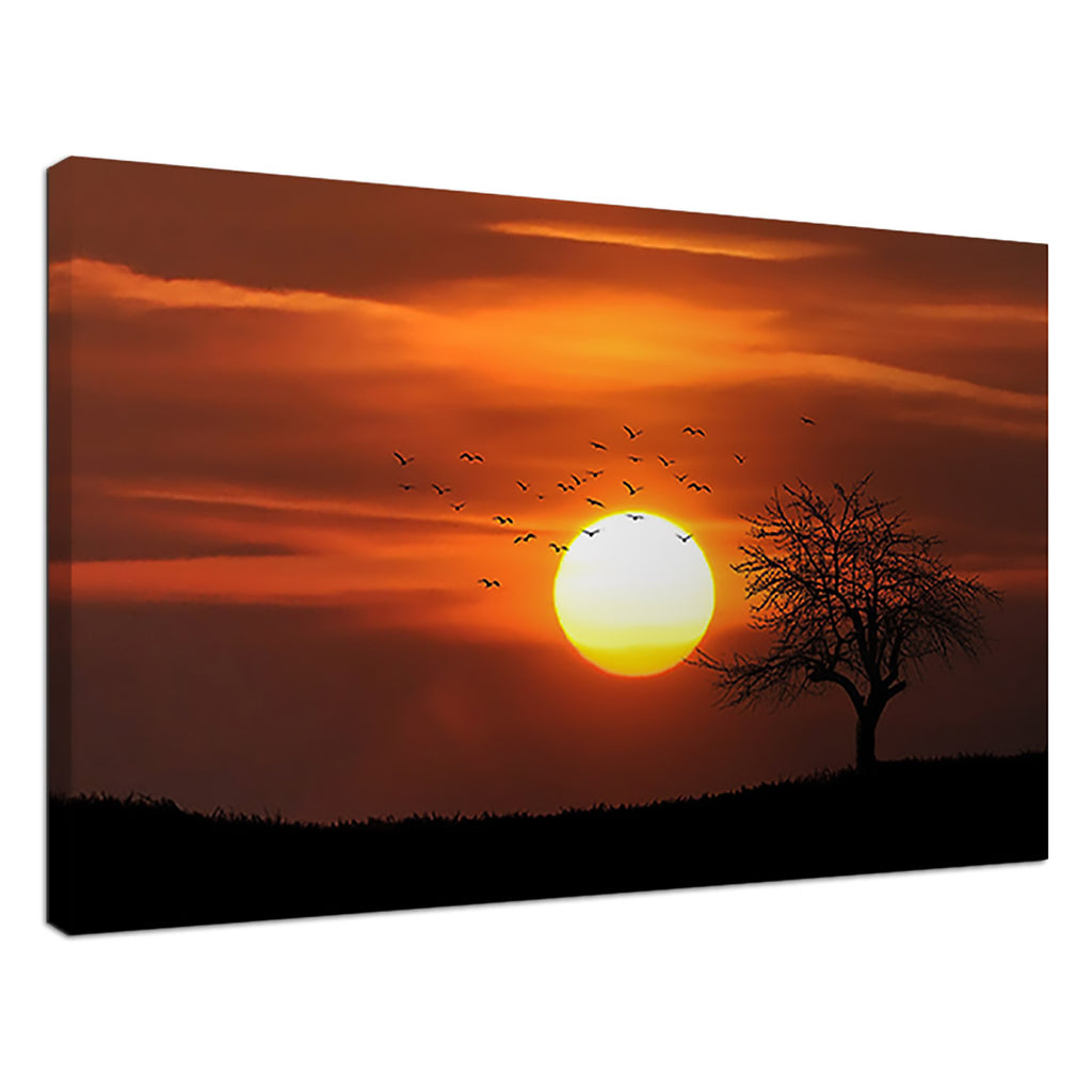 African Sunset Orange Sunset Sun Tree Birds