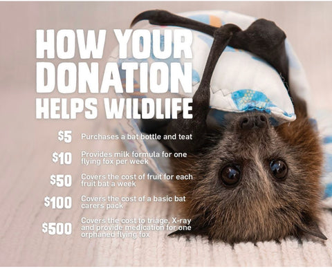 How your donations help wildlife