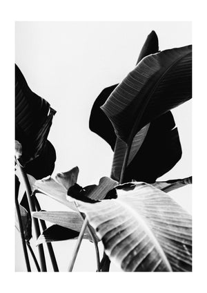 Plant life - Black & White Photography Print Duo