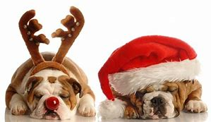 Keep Pets Safe and Happy Over the Festive Season