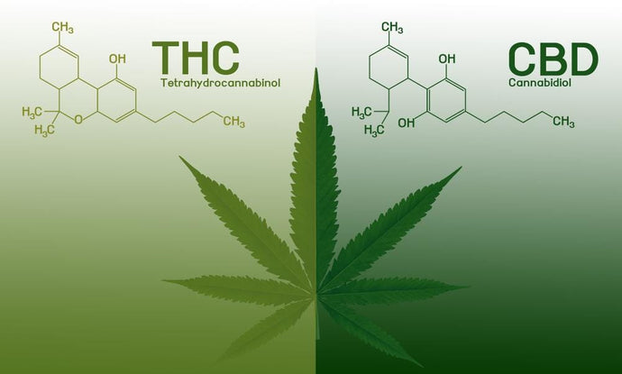 The Differences Between THC and CBD