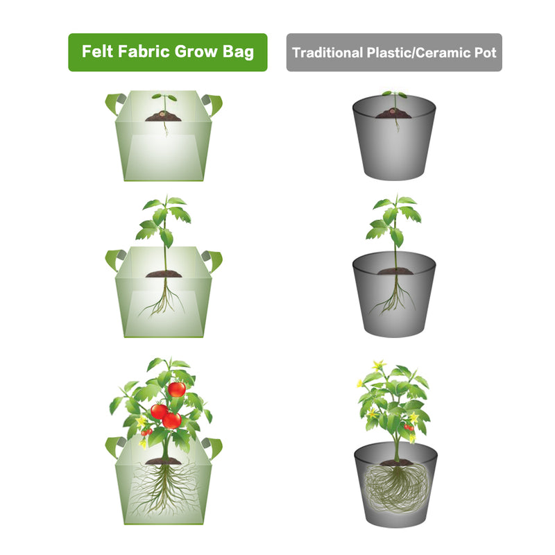Fabric Grow Bags vs Plastic Pot