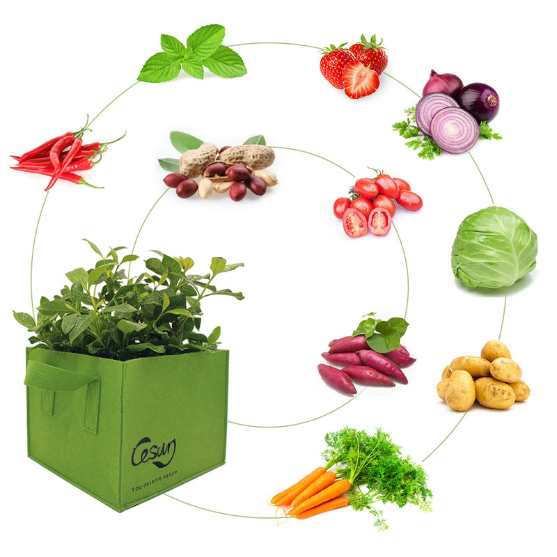 Fruits, Vegetables for grow bags