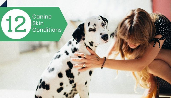 12 Skin Conditions Commonly Found in Dogs