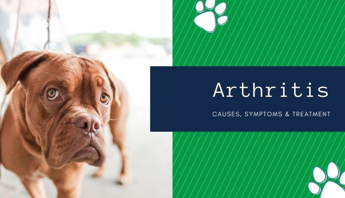 Arthritis: Causes, Symptoms & Treatment