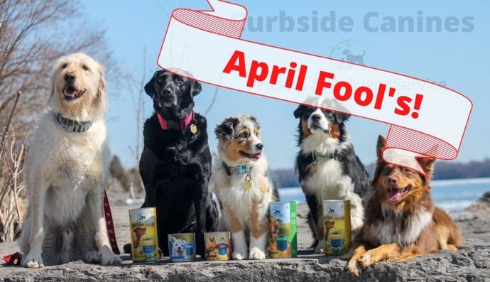 PureForm Pet Health Announces New Curbside Canine Pickup & Delivery Service