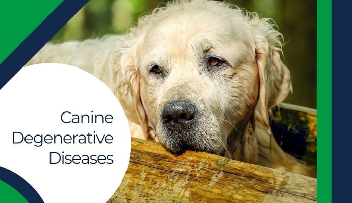 3 Common Canine Degenerative Diseases