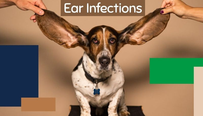 Ear Infections: Causes, Symptoms & Treatments