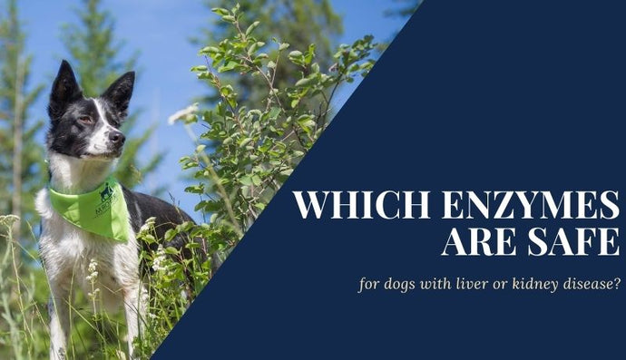 Which Enzymes Are Safe for Dogs with Liver or Kidney Disease?