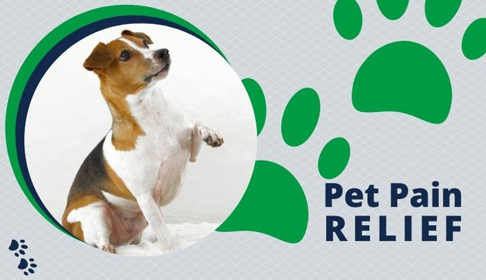 Pet Pain Relief: Natural & Medicinal Treatments