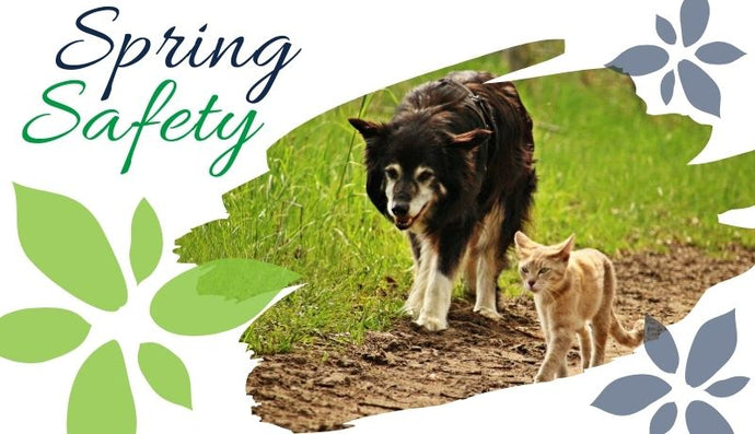 Springtime Pet Safety Tips
