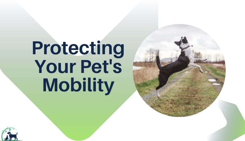 Protecting Pet Mobility