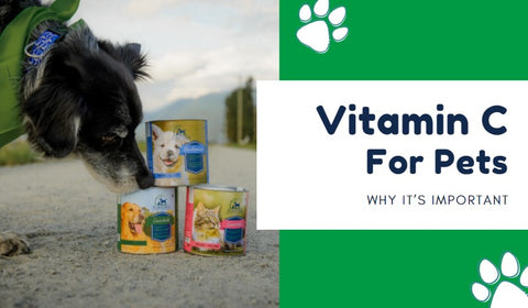 Vitamin C For Pets: Why It's Important
