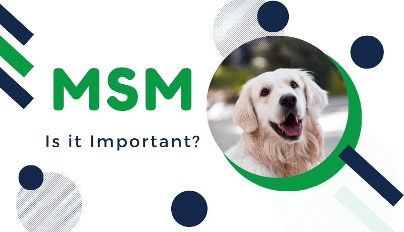 MSM for Pets