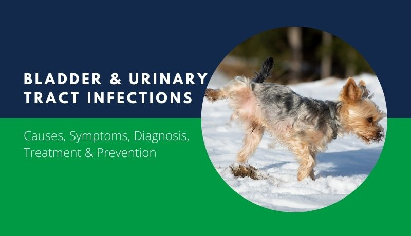 bladder infections & urinary tract infections in dogs and cats