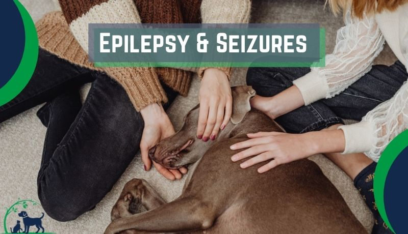 Epilepsy and seizures in dogs and cats