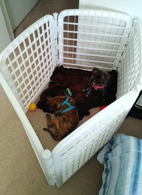 Gate Crate for puppies