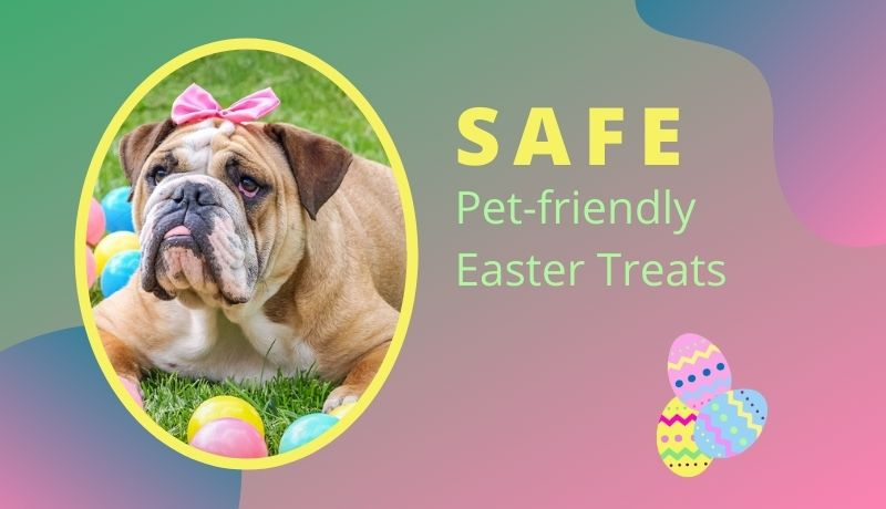 5 Toxic Foods for Pets + 3 Pet-friendly Easter Treat Recipes