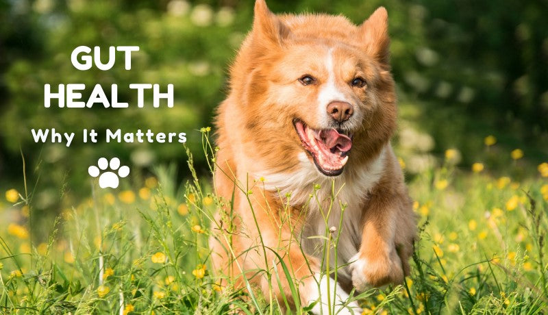 Gut Health: Why it's Crucial for Your Pet's Wellbeing